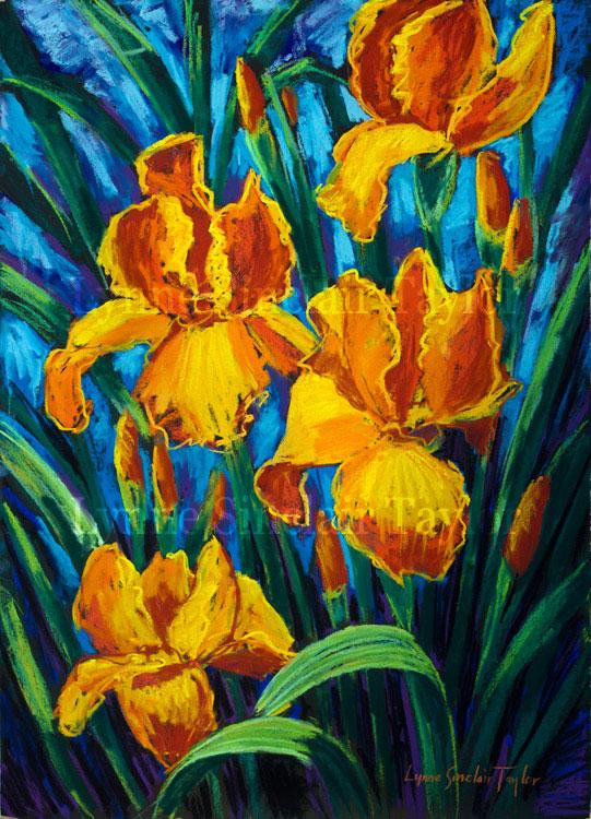 Orange Irises